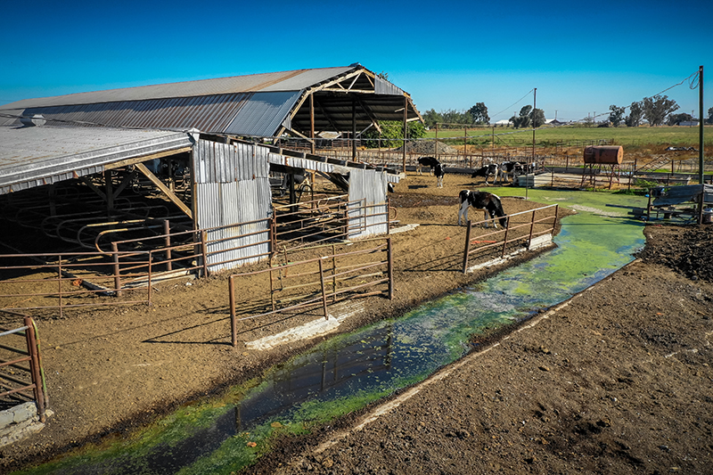 Farm cows waste water.