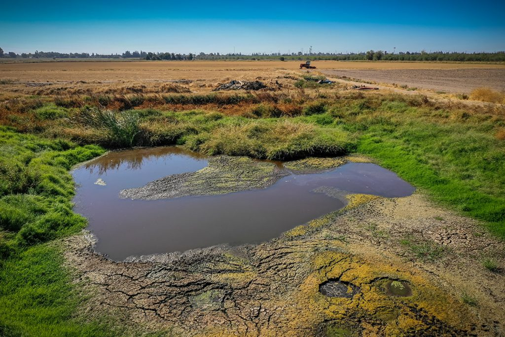 Stagnant pond in a dry, grassy field.